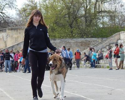 В Севастополе прошла выставка собак (фото)