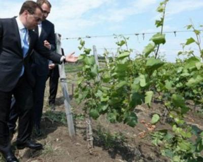 В Крыму будут уникальные виноградники!