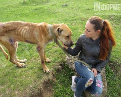Собаку длительное время хладнокровно морили голодом (фото 18+, видео)