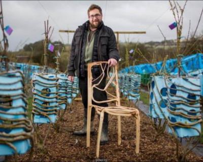 Британец выращивает мебель (фото)