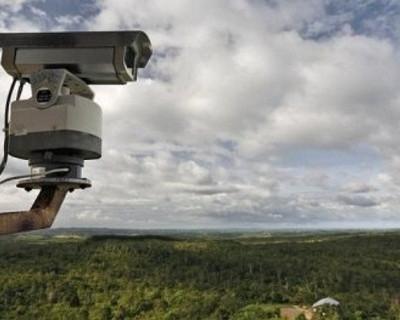 В лесах установят видеокамеры. За кем следят?