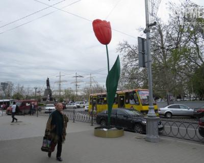 """Это какие же должны быть пчелы, чтобы опылять гигантские """"севастопольские тюльпаны""""? (фото)"""