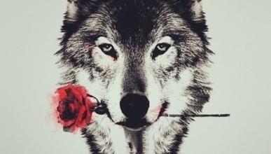 Стая  волков орудует рядом! Но может возвратиться к  Севастополю... (фото, видео)