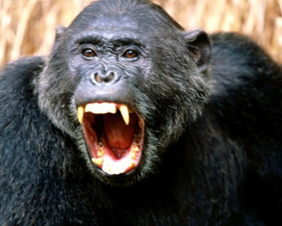 Внимание! В Севастополе разыскивается дикая обезьяна