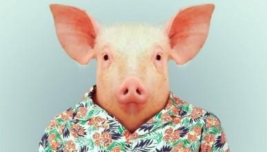 Севастопольцы превращаются в свиней? (фото)