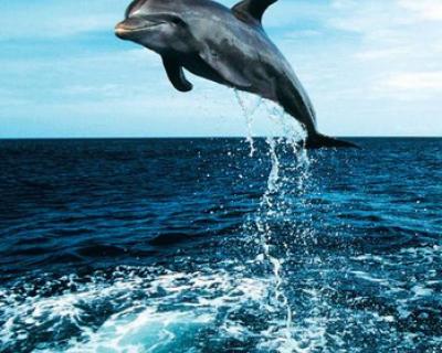Как умирают дельфины (фото)