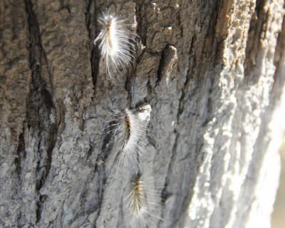 Американское зло на гусеничном ходу (видео, фото)