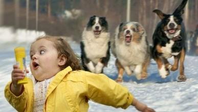 Севастопольские дикие собаки атакуют и..... выигрывают? (фото)