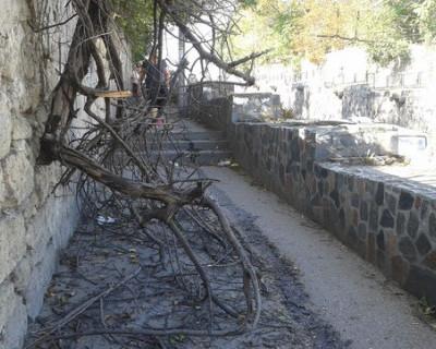 В центре Севастополя свалилось дерево и отдыхает?! (фото)
