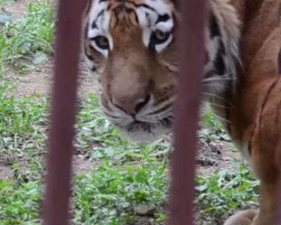 В Симферопольском зоопарке животные изголодались настолько, что готовы есть куриные шкурки