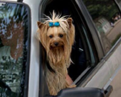 """""""За один день найдены две пропажи!"""" Где ваша собачка и как вы ездите без прав? (фото пропажи)"""