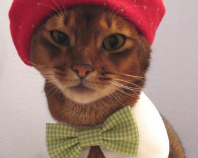 """Дары апокалипсиса: """"Житель Чувашии зарезал гостя, пнувшего его котенка"""""""