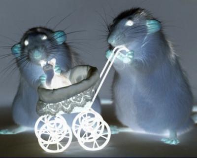 Сотни крыс нашли пристанище в жилом доме №23