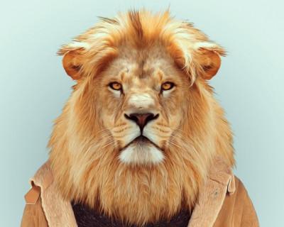 Грустное путешествие в сказочное царство львов (фото, видео)