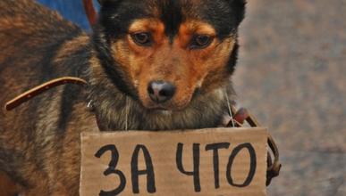 Чем травят собак и чем это чревато (фото)