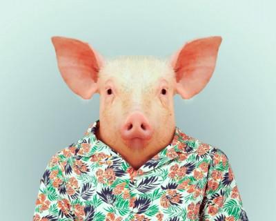 В Крыму зарегистрирован первый случай свиного гриппа