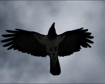 В Евпатории вороны массово уходят на тот свет (фотофакт)