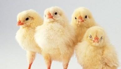 В Крыму ввели режим чрезвычайной ситуации из-за птиц