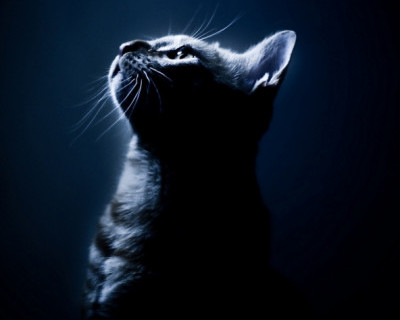 Разгоним уличную темноту совместными усилиями! (фото)