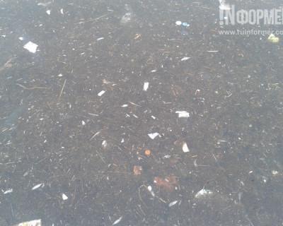 Вам хочется чистого моря в Севастополе? Тогда пора будить коммунальщиков (фото)