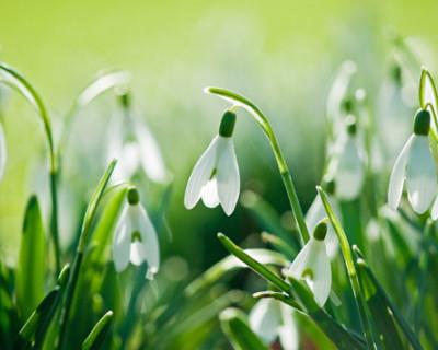 Раскрыт секрет ранней весны в Севастополе (фото)