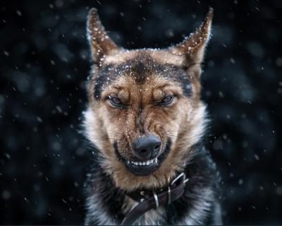 Домашний пес вернулся к хозяевам с человеческой головой в зубах