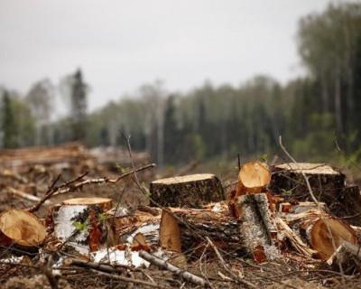 Кто приделал ноги крымскому лесу? (видео)