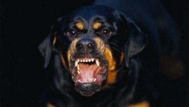 В Крыму пса пристрелили, но человека попытались спасти