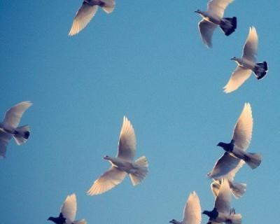 В Севастополе взлетели голуби, привязанные к воздушным шарикам (фото)