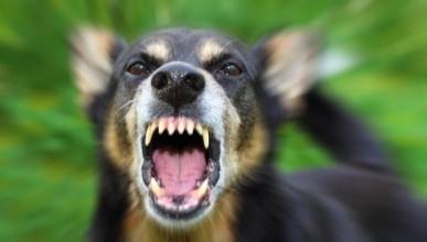 Опять нападение бездомных собак на человека. Что скажут крымские и севастопольские защитники бездомных собак? (фото)
