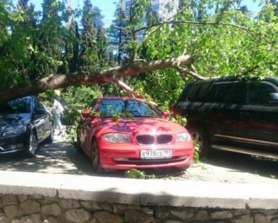 В Ялте на автомобили упало дерево: желающих возместить убытки не наблюдается (фото)