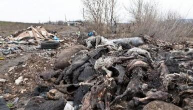 Кости и внутренности животных сваливали в яму возле жилых домов крымского села