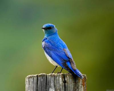 «Синяя птица» омолодила севастопольцев на 40 лет (фото, видео)