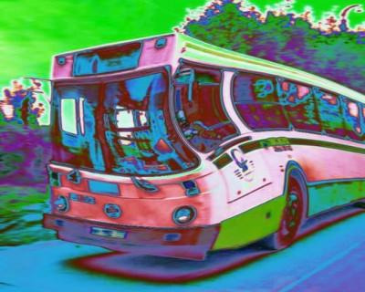 ДТП в Крыму: автобус устроил незапланированный пикник на обочине (фото)
