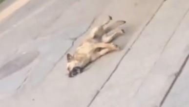 В Севастополе неизвестные травят собак