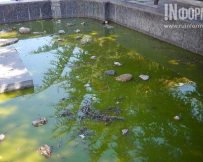 В Севастополе «цветёт» фонтан-болото - лягушки ещё не успели заселиться