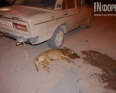 В День Победы Севастополь умылся собачьей кровью. 18+
