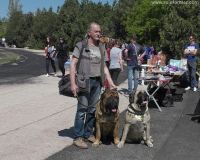 Выставка собак на Кубок Севастополя «ВЕСЕННИЙ ФЕСТИВАЛЬ»