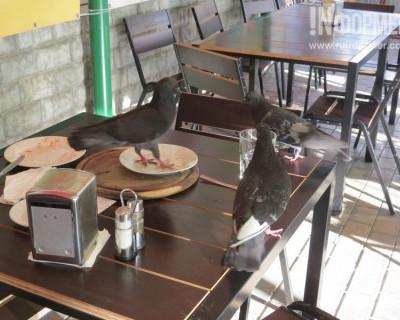 В пиццерии Севастополя кормят очень вкусно?! Даже голуби выстроились в очередь (фото)