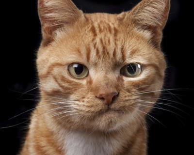 ДТП в Крыму: рыжая кошка не успела перебежать дорогу (фото 18+)