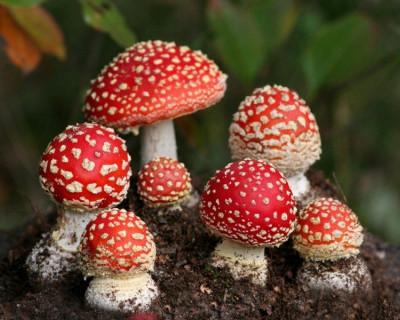 Медики бьют тревогу: «В Севастополе грибной сезон» открыт...