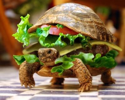 Севастопольская торговая сеть «ПУД» продает чизбургеры «По-домашнему» с камнями (фото)