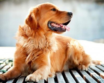 Севастопольский полицейский вернул «загулявшую» собаку домой