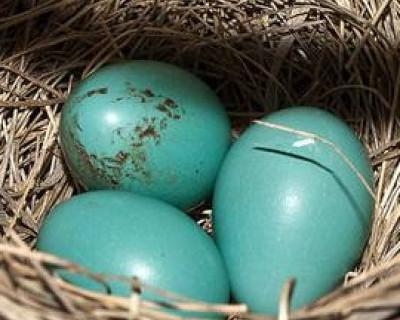 В крымских огородах завелись чьи-то яйца – люди озадачены (фото)