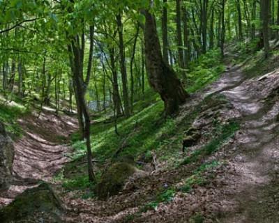 Экологическая катастрофа в уникальном крымском лесу