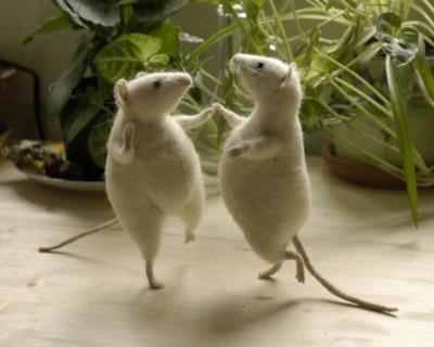 Севастопольские крысы танцуют на фонарных столбах и позируют фотографам