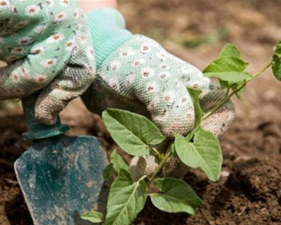 С севастопольских садоводов пытаются содрать «семь шкур»