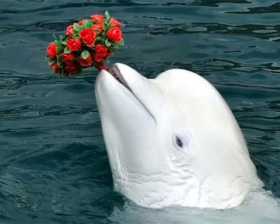 Неужели в Севастополе не будет дельфинария?