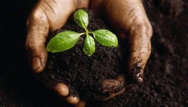 Как у севастопольцев «отжимают» землю?