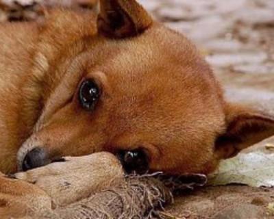 В Севастополе массово уничтожают бездомных животных